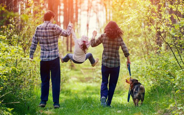Dog Walking Safety Tips Falls Church Animal Hospital