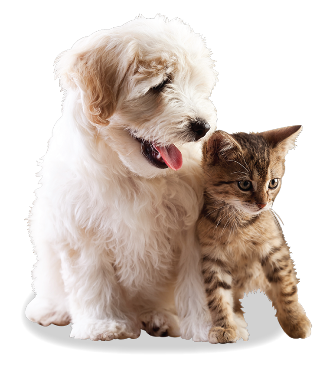 Falls Church Animal Hospital | Veterinarian Falls Church