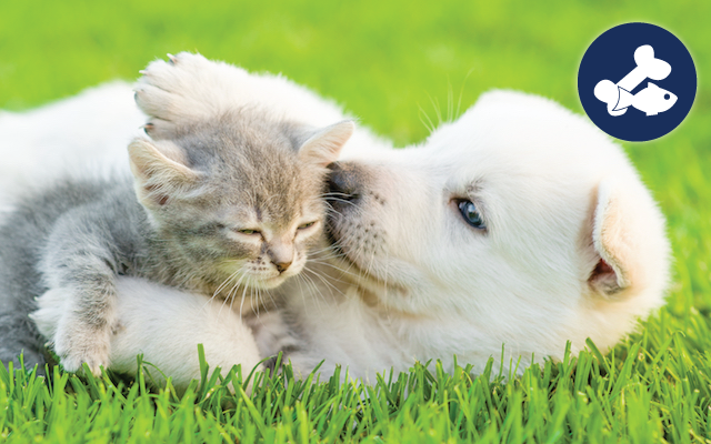 puppy and kitten playing