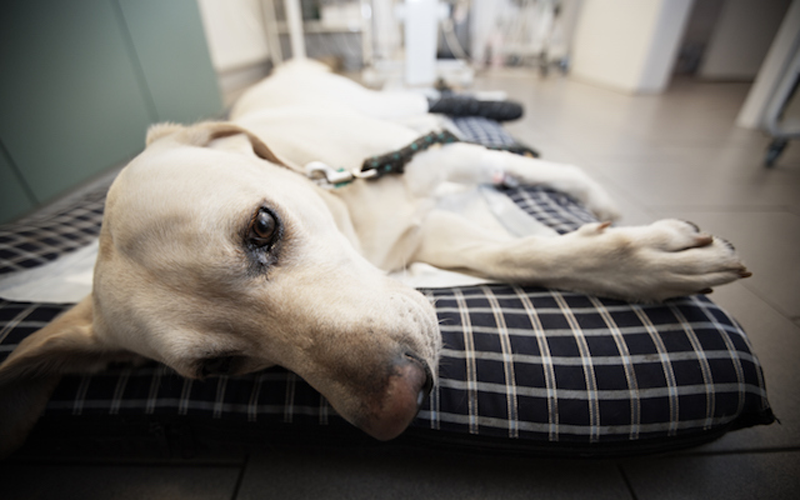 Anesthesia-Free Dental Cleanings | Falls Church Animal Hospital