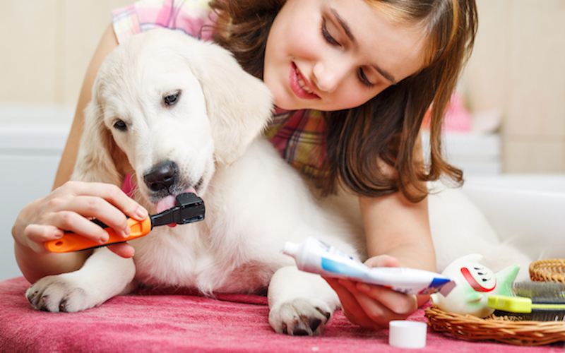 Your Pet's Dental Health