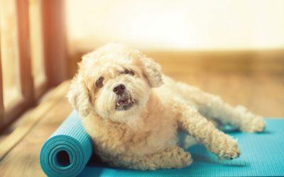 white dog wellness programs