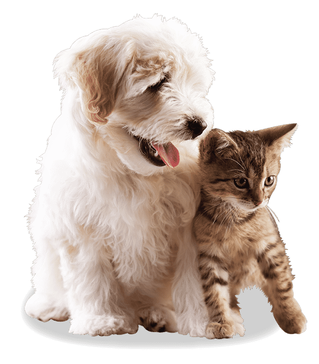 cat and dog testimonials