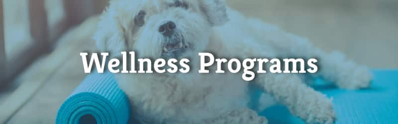mobile wellness programs