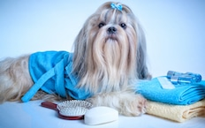 nav-pet-resort-spa-dog-grooming
