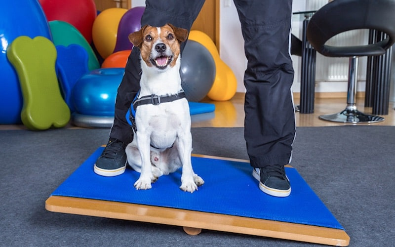 dog physical therapy