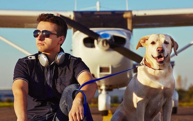dog sitting with pilot