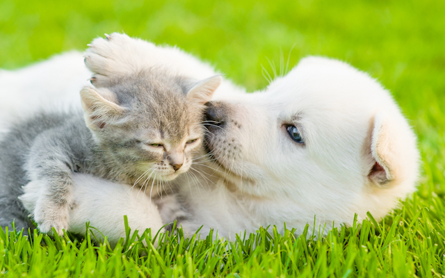 playful puppy and kitten in grass